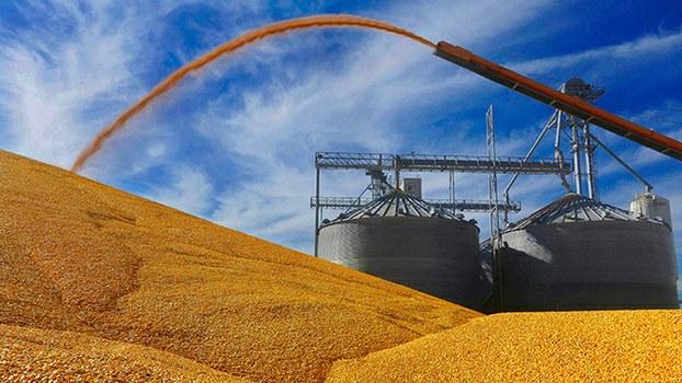 资料图片:美国伊利诺伊州一家农场收获的玉米(美联社)