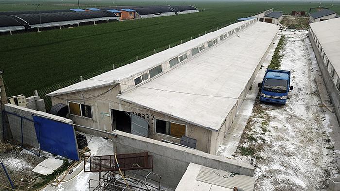 资料图片:2019年5月8日,河北省一家养猪场为控制猪瘟而进行消毒。(美联社)