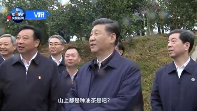2019年9月16日,正在河南考察调研的习近平来到光山县司马光油茶园,察看当地产业脱贫工作成效。(视频截图)