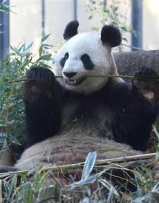"""上野动物园是日中友好的一处圣地。1972年,日中恢复邦交正常化后第二个月,中国政府赠送的大熊猫""""兰兰""""抵达上野动物园。(南洲提供)"""