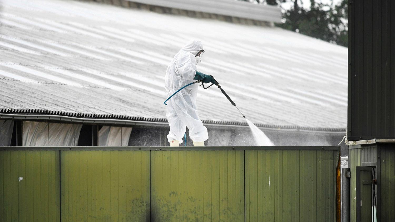 荷兰养殖场大规模扑杀水貂,工作人员小心翼翼消毒。(路透社)
