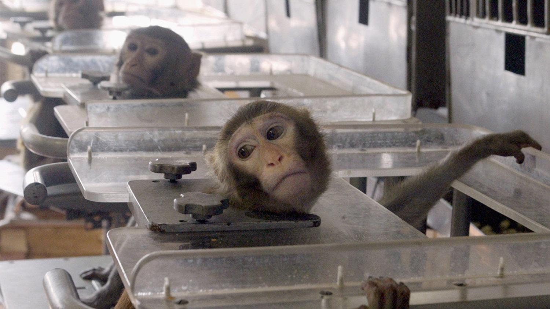 实验动物的综合风险管控不足,可能威胁人类健康和整体生态安全。(路透社)