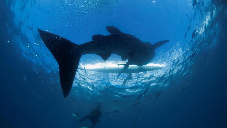 人为噪音对海洋生物的影响逐渐浮上台面。(路透社)