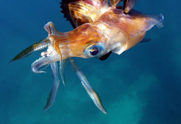 鱿鱼是中国远洋渔业的支柱,中国鱿钓船横扫公海5至7成捕捞量。(法新社)