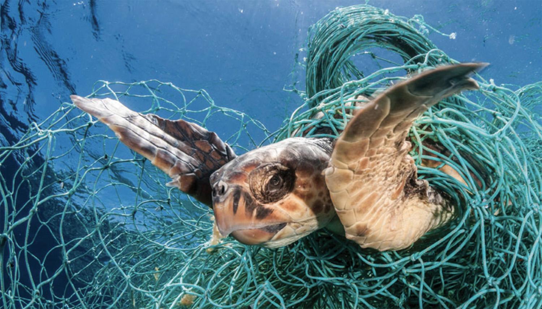 幽灵渔网缠住海龟,每年枉送性命的海洋生物不计其数。(翻摄自世界动物保护协会报告)