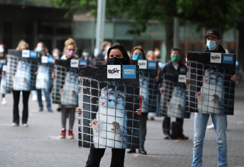 随着疫情升温,动保人士走上街头反对皮草产业,各国也陆续宣布养殖禁令。(路透社)