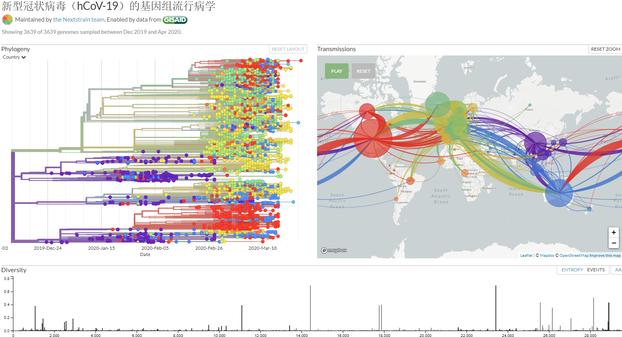 nextstrain.org/ncov/zh公布的新冠病毒基因进化树。(网站截图)